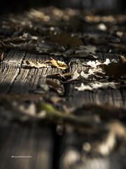 @autunno (falcinellilaura2) Tags: autunno autumn autumnweather autumnday autumnlove loveautumn autumncolors autumnseason autumnobsessed autumninstagram autumnaccount fall weheartautumn almostwinter autumntime autumnmood autumnishere autumnvibes
