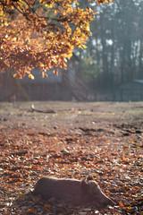 DSCF3471 (Kam_!) Tags: xt2 fuji fujifilm woods fall animal 56mm apd