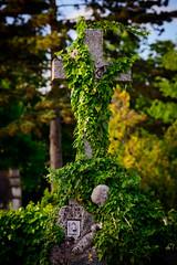 overgrown cross (Sam Scholes) Tags: stone mirogojcemetery graves zagreb travel overgrown landmark green graveyard cross vacation europe cemetery croatia cityofzagreb hr