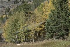 Colorado camo (Rocky Pix) Tags: coloradocamo moffattunnel supervisor manager tunnel workers staff unionpacific up drgw denverriograndewestern denvernorthwesternpacificrr dnwprr grade mammothpark denversaltlake dsl tolland rollinsville rockypix rocky mountain pix wmichelkiteleyf16 1100thsec 58mm 2470mmf28g nikkor normalzoom monopod