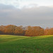 Sunlit fields and woodland in early winter