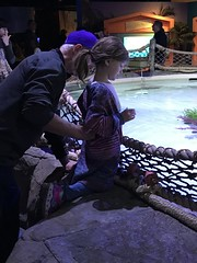 "2018-03-24-to-30-minnesotta-to-see-adam-and-sara-curl-with-family-at-aquarium-2_44036552755_o • <a style=""font-size:0.8em;"" href=""http://www.flickr.com/photos/109120354@N07/45305664165/"" target=""_blank"">View on Flickr</a>"