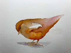 B113-365 one bird a day - Quick sketch in Ecoline Ink with waterbrush. (www.doortje.nl) Tags: challenge 鳥 one bird day 365 vogel pájaro uccello passarinho طائر oiseau птица birdo voël 鸟 doortjenl wwwdoortjenl wwwdroedelsnl www1tekeningperdagnl wwweentekeningperdagnl