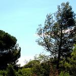 Selva - Wood