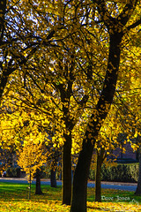 Fall-1-6 LOGO (Dave Jones Photography UK) Tags: fall autunm trees pumpkin halloween landscape sunset billinge