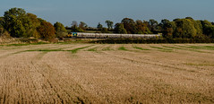 The Hope Cement (Peter Leigh50) Tags: freight freightliner west langton landscape fujifilm fuji field farmland railway railroad rural rail train trees autumn autume cement tanks xt2 sunshine class 66 shed