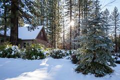 CFL-20181130-0082-W (Chi Fung Leung) Tags: bigbear cabin snow trees landscape