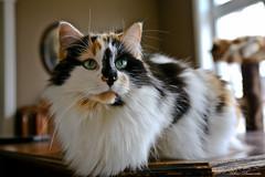 IMG_2057-1 (Helene Bassaraba) Tags: coth5 bestofcats catmoments vg~catsgallery