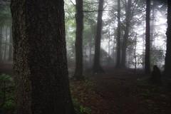 *** (pszcz9) Tags: polska poland przyroda nature natura naturaleza parknarodowy nationalpark góry świętokrzyskie las forest pejzaż landscape mgła fog beautifulearth sony a77 drzewo tree