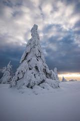 Mon beau sapin (Manonlemagnion) Tags: nature paysage neige hiver givre vosges froid blanc lumière matin nuage montagne hohneck troisfours nikond810 1635mmf4