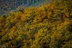 Blue Ridge Parkway (nebulous 1) Tags: blueridgeparkway northcarolina nc autumn trees colors fall yellow green red nikon nebulous1 glene