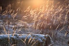 Frankenland (geraldtourniaire) Tags: canon schärfentiefe sonnenuntergang natur nature 70200l 70200mm landschaft licht l 6d eos6d franken mittelfranken
