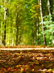 Memories of Autumn (Mathias Munkenbeck) Tags: autumn colorful herbst farben bokeh depthoffield deutschland tiefenunschärfe blätter color microfourthird panasonic germany köln cologne