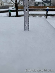 January 28, 2019 - Snowfall total from 120th & Holly. (Alysia Soto Rhoden)
