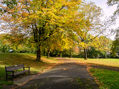 Autumn in Whitaker Park (Matthew_Hartley) Tags: autumn fall whitakerpark park tree trees rawtenstall rossendale lancashire northwest england uk britain panasonic gm1 microfourthirds m43 mft vario 1232 1232mm