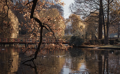 The lovely park and autumn .. (Julie Greg .. Holiday 13/12 - 31/12 2018) Tags: autumn autumn2018 park nature nautre colours canon lake landscape tree trees leaf leafs leedcastle water