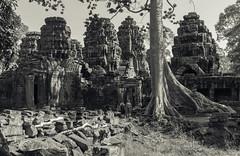 Camboya (U2iano) Tags: camboya cambodia arboles tree historic historia history templo temple banco y negro bn