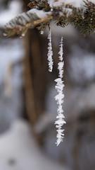 Ice Crystals on a Spiders' Web (Lee Rosenbaum) Tags: banffnationalpark crystals spiderweb alberta canada lake lakelouise trees ice