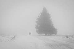 A winter walk (Pascal Riemann) Tags: schnee deutschland nebel pflanze landschaft kahlerasten person sauerland menschen weg baum natur winterberg germany landscape nature outdoor snow path people plant
