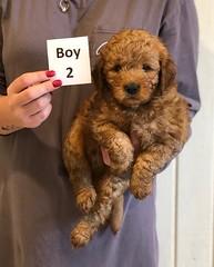 Darby Boy 2 pic 2 12-9