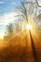 Sun shines through (marfis75) Tags: momente moment magisch magic neblig nebliz mist foggy fog rauch nebel mood stimmungsvoll freundlich wrm glow glühen beaming strahlen strahlend strahlung strahl beam yellow gelb hell wach aufwachen aufstehen wärmer wärme warm stimmung holz wald sunset sunny day tag wiesbaden marfis75 stamm stämme between zwischen durch through sonnig scheinen shining shine sun sonne early morgen morning morgens beginn anfang anfangs kalt tief ammorgen früh wakeup wake awake erstrahlen