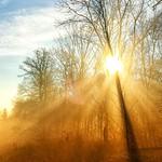 Sun shines through thumbnail
