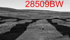 robfrance5d2_28509bw_280918_ribblehead_viaduct_inf_edr16lr6sefxpropse15cefx4weblowres (RF_1) Tags: 2018 britain british dales england rail railroad rails railway railwayviaduct railways ribblehead ribbleheadviaduct rural sc settlecarlisle shadow shadows transport uk unitedkingdom viaduct yorkshire