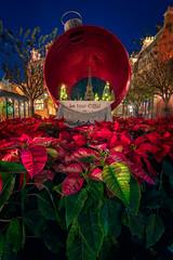 Christmas in France (MarcStampfli) Tags: disney epcot florida france night nikond7500 themeparks vacationkingdom wdw waltdisneyworld worldshowcase