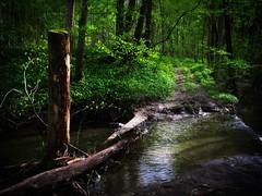 Furt im Wald nicht Furth im Wald (Maquarius) Tags: furt im wald bach böhlgrund zell am ebersberg steigerwald unterfranken franken stöckigsbach