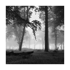 Hanging Garden (Nick green2012) Tags: trees mist square landscape blackandwhite silence