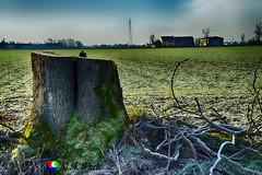 La fine della vita (Gianni Armano) Tags: la fine della vita foto gianni armano photo flickr