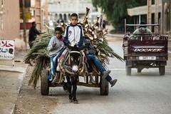 mezzi di trasporto (anna barbi) Tags: marocco asino bambini mezziditrasporto