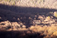 Winter Sun Bathing (Vladimir Grablev) Tags: view landscape winter nature nationalpark mountains appalachian shadows shenandoah virginia hiking trail valleylight bearfencemountain trees scenic areal