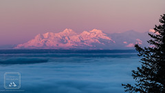 Pink & Purple Mountains (fentonphotography) Tags: alaska sunrise winter mountain alpenglow pink purple clouds landscape snow tree