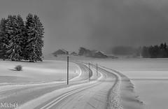 Le fil d'ariane (paul.porral) Tags: snow snowy frozen landscape paysage paisaje neige hiver winter froid matin jura swiss switzerland ngc flickr canon7d canon vaud mono monochrome noiretblanc blackandwhite bnw bw