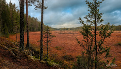 Soidinsuo (Joni Salama) Tags: suo soidinkierros nuuksio luonto panorama espoo suomi syksy uusimaa finland fi swamp nature autumn fall landscape
