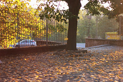 (mihxiii) Tags: autumn leaves falling yellow 50mm f18 sunlight