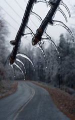 Fanged Emphasis (oldoinyo) Tags: trees ice glazing freezingrain icestorm northcarolina