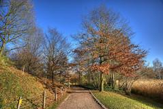 25-Britzer Garten_181116_N- 13 (sigkan) Tags: deutschland berlin britzergarten hdr nikond700 nikon2485mmf284