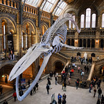 Hintze Hall, entrance to the Natural History Museum thumbnail