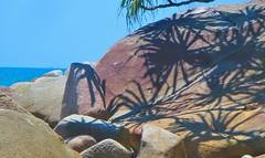 palm shadows - Fitzroy Island, Qeensland Australia (jeffglobalwanderer) Tags: fitzroyisland queensland australia island boulder rockyshore palmfrond shadow shadows greatbarrierreefisland beach