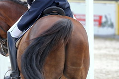 _MG_7155 (dreiwn) Tags: dressurprüfung dressurreiten dressurpferd ridingarena reitturnier reiten reitplatz reitverein reitsport ridingclub equestrian horse horseback horseriding horseshow pferdesport pferd pony pferde dressur dressuur dressyr dressage