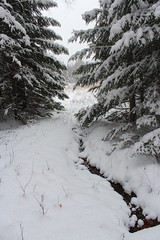 Watercourse (view2share) Tags: upperpeninsula uppermichigan northernmichigan northwoods northwood michigan mi woods forest ottawanationalforest houghtoncounty snow snowfall cold autumn fall november2018 november 2018 november122018 nature rural weather