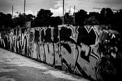 GraFFiTi (radoslav.bonev) Tags: graffiti streetphotography streetart spain españa tree autumn blackwhite blanconegro bw blackandwhite palmademallorca park parque bokeh clouds canon canon700d photography