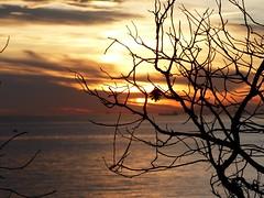 Tamarit (18) (calafellvalo) Tags: tamaritcastillotarragonaplayacostacoastautumnatarcecercalafellvalo tamarit costa tarragona castle atardecer contraluz calafellvalo mediterranean tarde sunset tarraco sea mar