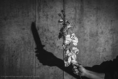 6/52 Ombres et lumières (Jean-Philippe Parisella) Tags: green shadow flowers monochrome black blackandwhite white concrete texture knife nikon d3000