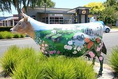 Art on an unusual canvas (Karen Pincott) Tags: art cow newzealand morrinsville dairying town ruraltown everlynruby artist