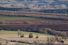 Colores castellanos (ramosblancor) Tags: naturaleza nature paisaje landscape campos fields color invierno winter cereal castilla segovia españa spain