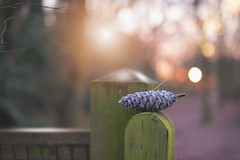 Frosty Fences...  #FenceFriday #HappyFenceFriday (KissThePixel) Tags: fence fencefriday fencephotography fencebokeh woodland woodenfence longacremanor sunrise sunlight bokeh bokehlicious morning macro friday happyfencefriday frost january cone nature beautiful beautifulday beautifulmorning nikon nikond750 50mm sigmaart sigmaf14 f14