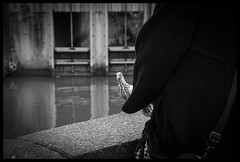 2018-12-23-Louvain-35px (Pontalain) Tags: anyvision blackandwhite darkness human labels monochromephotography room tintsandshades black caché hand manteau monochrome photography pigeon shoe sitting street style water white louvain brabantflamand belgique be